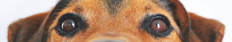 犬と猫の獣医栄養学